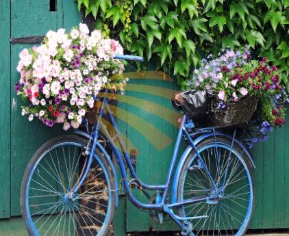 600 Watts Bike With Flowers Panel