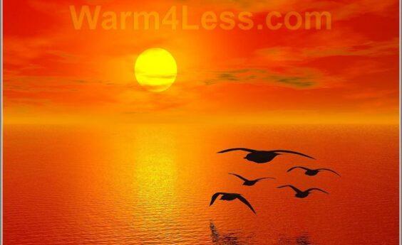 960 Watts Sun Birds Panel